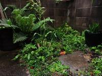 植物「雨の日」 - 孤影悄然