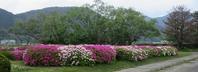 ツツジ - 山の花、町の花