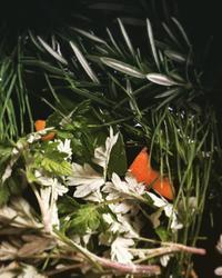 アーユルヴェーダ - ナチュラル キッチン せさみ & ヒーリングルーム セサミ