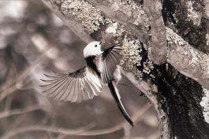 北大演習林野鳥を撮る -