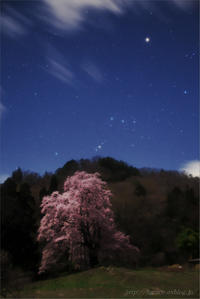 月夜の里山一本桜 - 遥かなる月光の旅