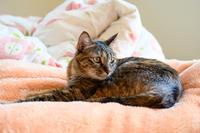 あの毛布を出して - 猫と夕焼け