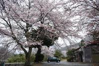 知和駅の春 - 詩輝彩物語