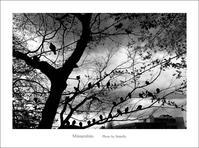 平和の象徴 - Minnenfoto