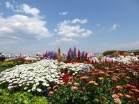 空と海とお花とベンチ♪横浜の山下公園も花いっぱいだったよ♪ - ルソイの半バックパッカー旅
