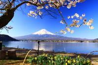 31年4月の富士(27)河口湖の桜と富士 - 富士への散歩道 ~撮影記~