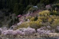 桃源郷の春① - katsuのヘタッピ風景