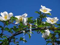 蔓花に - 霧島メジロのデジカメ日記