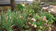 GW前の雨上がりの庭 - 今から・花