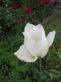 庭のお花たち - 花の自由旋律