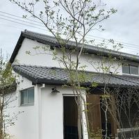 仏生山の森Ⅱ - 緑のしずく (ベランダガーデン便り)