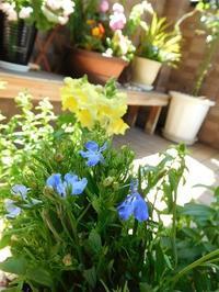 お花のお手入れ - eri-quilt日記3