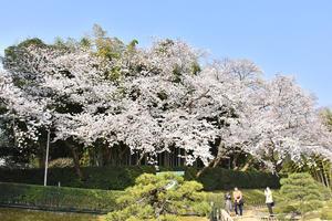 岡山後楽園 - Tax-accountant-office ソフトボールブログ