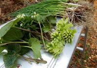 信州・南相木村で山菜採り体験 - 信州「アウトドア&田舎暮らし」