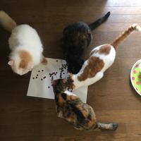 朝ごはん食べたでしょ! - ぶつぶつ独り言2(うちの猫ら2018)