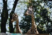 羽村市動物公園その4 - 動物園に嵌り中