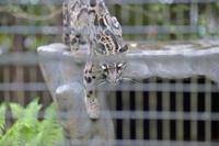 シェルターin_out - 動物園へ行こう