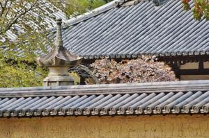 東大寺勧学院の桜 - たんぶーらんの戯言