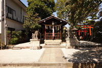 八幡宮のしだれ桜 - アンチLEICA宣言