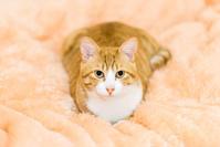 三年遅れの猫日記-45- - 猫と夕焼け