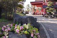 お隣大照寺の花 - 照片画廊