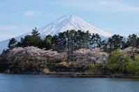 富士山と桜-6 - 自然と仲良くなれたらいいな2