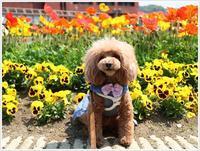 少し前のお散歩の続きは、花に囲まれたさくらと大、これぞ春だね!! - さくらおばちゃんの趣味悠遊