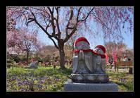 春のお地蔵さん - Desire