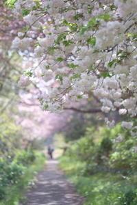 桃色に染まる牧場 - aya's photo