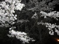 お花見ナイトノルディック、日程変更のお知らせ。 - 秀岳荘みんなのブログ!!