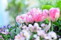 4月下旬の庭 - お茶の時間にしましょうか-キャロ&ローラのちいさなまいにち- Caroline & Laura's tea break