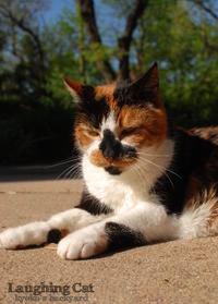 笑う猫? - Kyoko's Backyard ~アメリカで田舎暮らし~