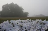 霧の朝(我が家の庭から) - きょうから あしたへ その2