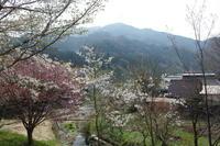 No 174  三ヶ上登山(1062m) - カメラをもってぶらぶら散歩中