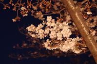 姫路城の夜桜(2019/4/5)其の② - 南の気ままな写真日記