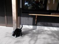 三島由紀夫VS東大全共闘 - シェークスピアの猫