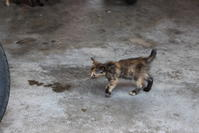 マランの子猫たち - 旅めぐり&花めぐり