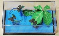 第三作「ジョウザンミドリシジミ/ミズナラの梢」 - むしジオラマ -ほか自分流園芸、自分流工作など-