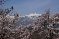 桜だより(36) 大町市の桜 (2019/4/23撮影) - toshiさんのお気楽ブログ
