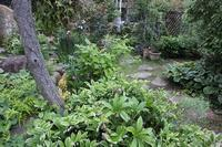 雨の後 - 絵と庭