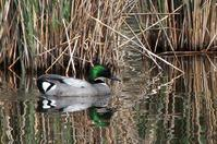 ★賑やかになってきました…先週末の鳥類園(2019.4.20~21) - 葛西臨海公園・鳥類園Ⅱ