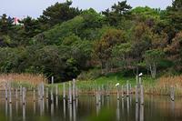 ★上の池に飛来した2羽のクロツラヘラサギ - 葛西臨海公園・鳥類園Ⅱ