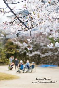 福山城の桜② - *花音の調べ*