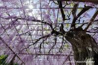 曼荼羅寺撮影会 - Digital Photo Diary