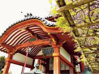 興福寺を詠む、と声高らかに言いたいものだ - 白雪ばぁばのかんづめ