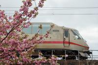 エクスプローラーと八重桜 - 今日も丹後鉄道