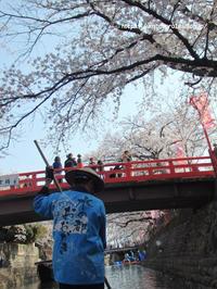 桜と橋と - 一瞬をみつめて