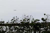 わかりやすいジャンボ - 南の島の飛行機日記