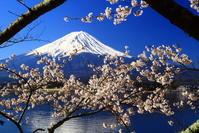 31年4月の富士(28)長崎公園の桜と富士 - 富士への散歩道 ~撮影記~