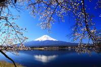 31年4月の富士(29)長崎公園の桜と富士 - 富士への散歩道 ~撮影記~
